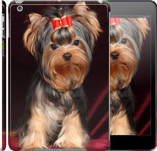 "Чехол для iPad 5 (Air) ""Йоркширский терьер"" - интернет-магазин чехлов endorphone.com.ua"
