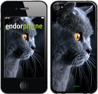 """Чехол для iPhone 4s """"Красивый кот"""" - интернет-магазин чехлов endorphone.com.ua"""