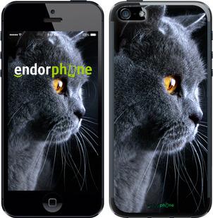 """Чехол для iPhone 5 """"Красивый кот"""" - интернет-магазин чехлов endorphone.com.ua"""
