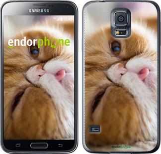 """Чехол для Samsung Galaxy S5 Duos SM G900FD """"Смешной персидский кот"""" - интернет-магазин чехлов endorphone.com.ua"""