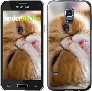 """Силиконовый чехол для Samsung Galaxy S5 mini G800H """"Смешной персидский кот"""" - интернет-магазин чехлов endorphone.com.ua"""