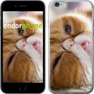 """Чехол для iPhone 6 Plus """"Смешной персидский кот"""" - интернет-магазин чехлов endorphone.com.ua"""