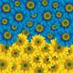 """Силиконовый чехол для Alcatel One Touch Pop C3 4033D """"Жёлто-голубые цветы"""" - интернет-магазин чехлов endorphone.com.ua"""