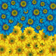 "Чехол для Sony Xperia E4 Dual E2115 ""Жёлто-голубые цветы"" - интернет-магазин чехлов endorphone.com.ua"