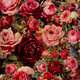 """Чехол для iPhone 5 """"Цветущие розы"""" - интернет-магазин чехлов endorphone.com.ua"""