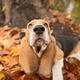 """Гибридный чехол для iPhone 5 """"Dogs nose autumn"""" - интернет-магазин чехлов endorphone.com.ua"""