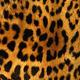"Чехол для iPhone XS Max ""Шкура леопарда"" - интернет-магазин чехлов endorphone.com.ua"