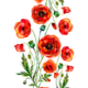 """Чехол для iPad mini """"Нарисованные маки"""" - интернет-магазин чехлов endorphone.com.ua"""