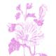 """Силиконовый чехол для iPhone 5 """"Розовый бутон. Цветок. Pink Flower Bloom"""" - интернет-магазин чехлов endorphone.com.ua"""