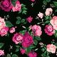 """Защитный чехол для iPhone 5 """"Розы на черном фоне"""" - интернет-магазин чехлов endorphone.com.ua"""